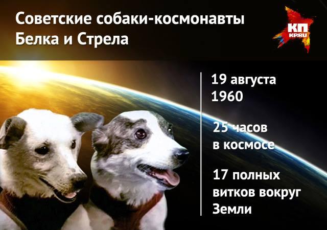 О собаках-космонавтах Белке и Стрелке через 55 лет.