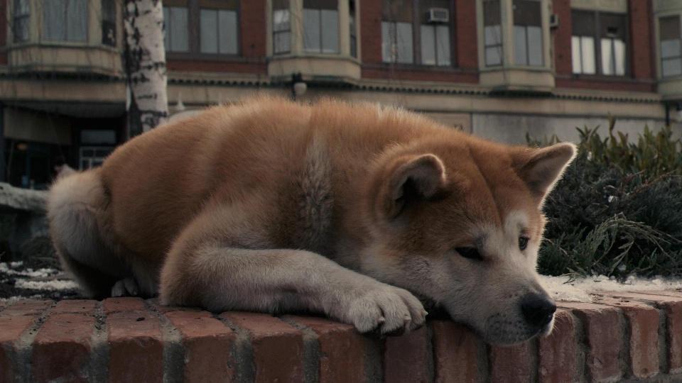 Лучшие фильмы про собак!