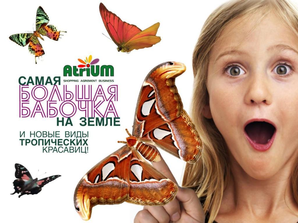 """Самая большая бабочка на Земле в ТЦ """"Atrium""""."""