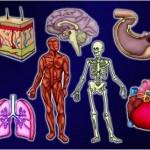 anatomy_of_me_logo-150x150