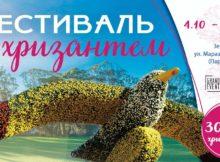 Фестиваль хризантем в Одессе.