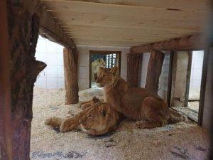 Кишиневский зоопарк ждет в гости.